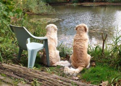 honden bij vijver